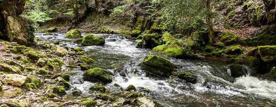 Bosque y cascada de Las Pisas