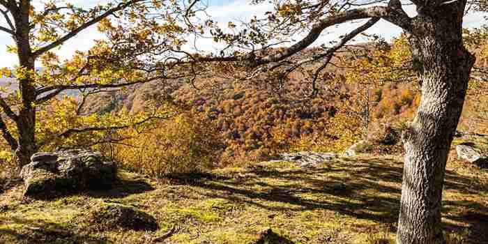Monte Hijedo, el embrujo del bosque otoñal