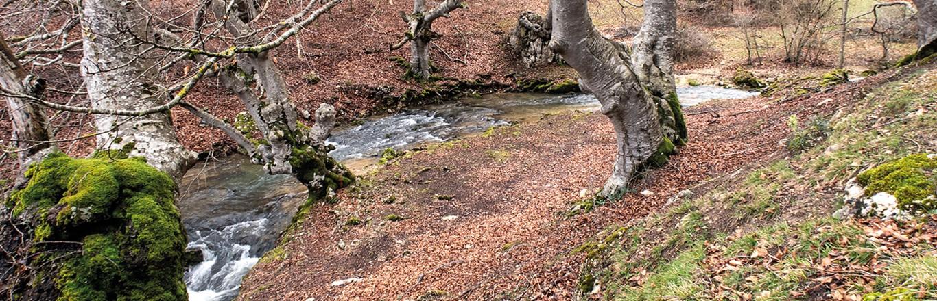 Desfiladero del Ayuda, el río del Condado de Treviño